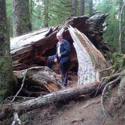 wood man
